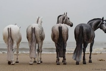 A horse, a horse, my kingdom for a horse! / by Wendy Evans
