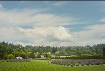 L O C A L / Places I'd like to visit close to home! :) #Seattle #Portland #Victoria #Vancouver