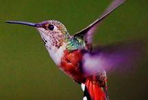 Birds / by Debra Browning