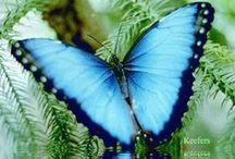 Butterflies & Moths / by Debra Browning