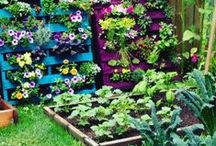 Balcony and Garden Inspiration