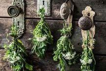 Magical Herbarium