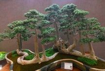"Bonsai (bone-sigh) and Penjing / I love the art of miniature trees, both bonsai and penjing. Bonsai is the Japanese art of dwarf potted trees. Chinese Penjing is the older art and literally means ""landscape in a tray"". Penjing can include trees, water, stones, and figurines. Penjing is the parent art to bonsai and suiseki, the art of viewing stones."