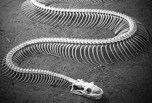 Skeletal system / by Lola Dee