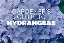 Garden:Tips and Helps / Tips and tricks to help you grow bigger plants, kill those wild weeds and chase away the pests.  Anything that can help....