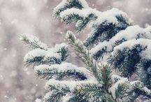 /winter