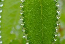 plantforms