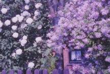 ≈ Lavender ♥ Purple ♥ Violet ♥ ≈