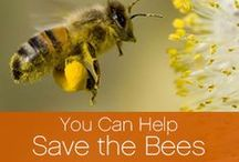 Bee Raw: Save the Bees / by Bee Raw