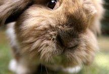 ≈ Fluffy ...Bunnies ≈