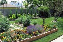 Gardening / by Laura Frazier Wilson