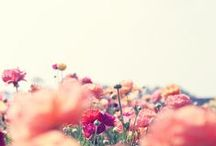 Flowers, they make me happy