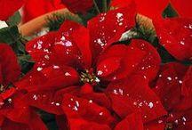 Christmas Joy 2 / by Sheila DiRoma