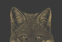 f o x e s / a collection of all things foxes, illustrations, photos, and goods