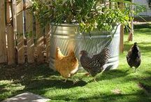 Keeping Chicken as Pets / by Backyard Chicken Coops