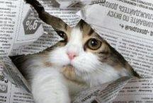 Here Kitty Kitty / Cats