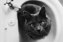 f u r / a collection of animals   furry friends   animal photography