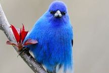 Colorful World of Birds / Birds of color