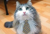 Office Pets / The cutest office pets around! / by Smart Savvy