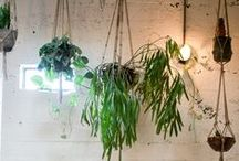 i n d o o r     g r e e n s / indoor plants   house plants   plant decor
