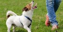 Doggie care and training tips / Dog care