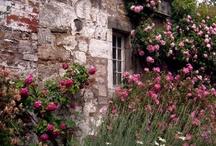 Côté Jardin....Garden