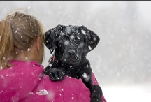 Dogs of Telluride / http://www.visittelluride.com/plan-your-trip/getting-here/pets