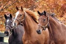 Horses / by Cynthia Graeter