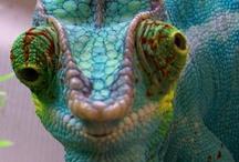 Colorful Creatures / by Debi MacKown