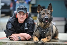Police Community Pins / Share the best police and law enforcement related pins in this community board. Once you've joined the board, invite others to share their police & law enforcement related pins & re-pins. Turn off group pin notifications here: http://pinterest.com/prefs / by POLICE Magazine