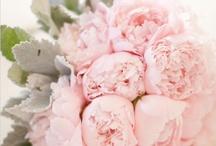 Collection de fleurs / by Vivian Chan