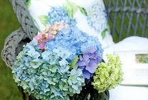 Hydrangeas / by Cindy Wade