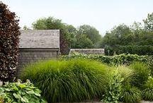 Landscape Design / by Sarah Hill