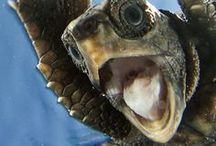"Portrait - animal / Hey you!  Look into the camera and say ""cheeeeeers""."