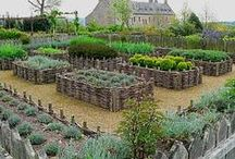 Potager and Herb Gardens / by Sarah Hill