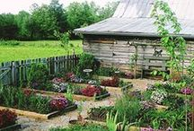 Raised Bed Gardening / by Sarah Hill