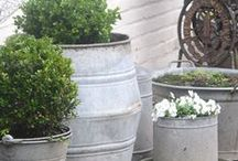 Container Gardening / by Sarah Hill