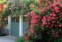 The Art of Flower Gardening / by Michelle Scrafton