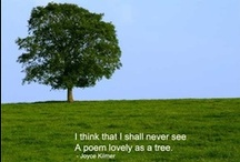 Trees / Resources for educators, leaders and parents