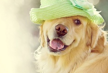 Smile ☺ / Adorable animals that put a smile on my face  / by Brittany Ann