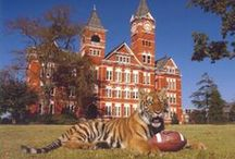 Auburn Tigers Fan Central / by Academy Sports + Outdoors