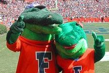 Florida Gators Fan Central / by Academy Sports + Outdoors