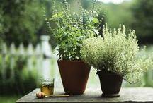 Gardening / Gardening & Organic Gardening inspirations, ideas and tutorials for all year round.