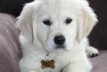 Cutest pups / by Alex Tobey