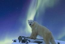 Aurora Borealis / by John Mitchell
