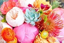 Earth Laughs Flowers / by Erin Lynn Olsen