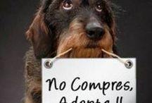 Chilean  Dogs  / Únicos e irrepetibles;  perros chilenos