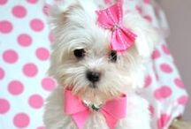 Doggone Cute