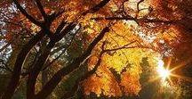herbst // fall / Der Herbst ist meine Lieblingsjahreszeit. Ich liebe Kürbis, Flammkuchen und frische Äpfel, den goldenen Oktober und die fallenden Blätter. Hier pinne ich Inspirationen rund um herbstliche Dekoration, Rezepte und Natur.