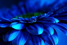 all things BLUE
